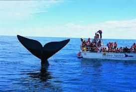 ballenas 456